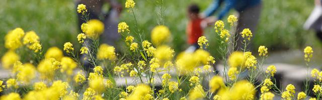 花粉やアレルギー反応│カバノアナタケ